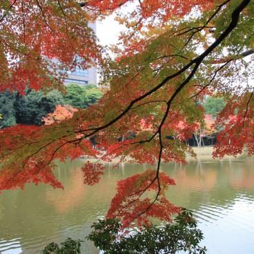 Jardins Botaniques De Koishikawa