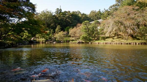 Parc du Narita-san, plan d'eau avec carpes koi et jardin japonais