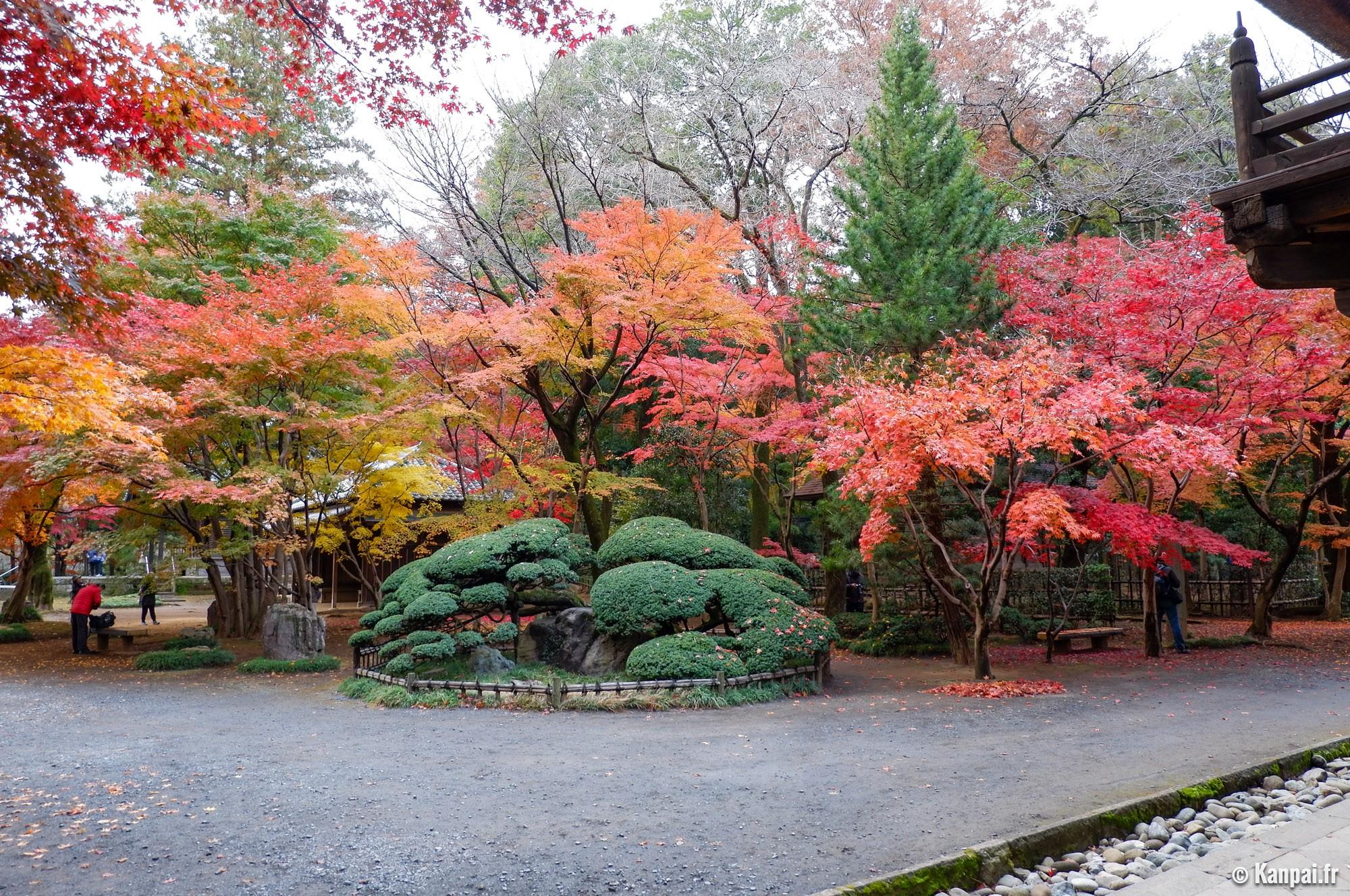 Erable Du Japon Petit heirin-ji - la forêt d'érables aux portes de tokyo