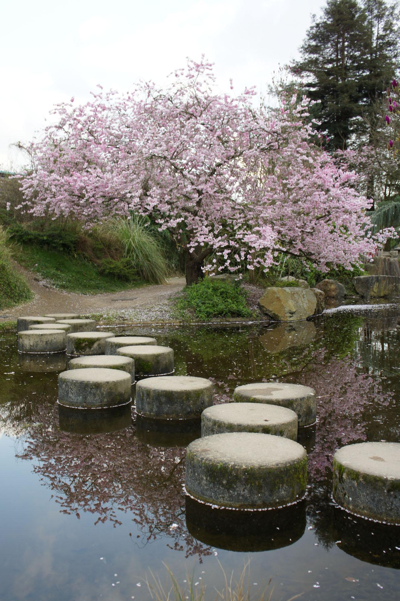 Jardin japonais nantes for Jardin japonais yvelines