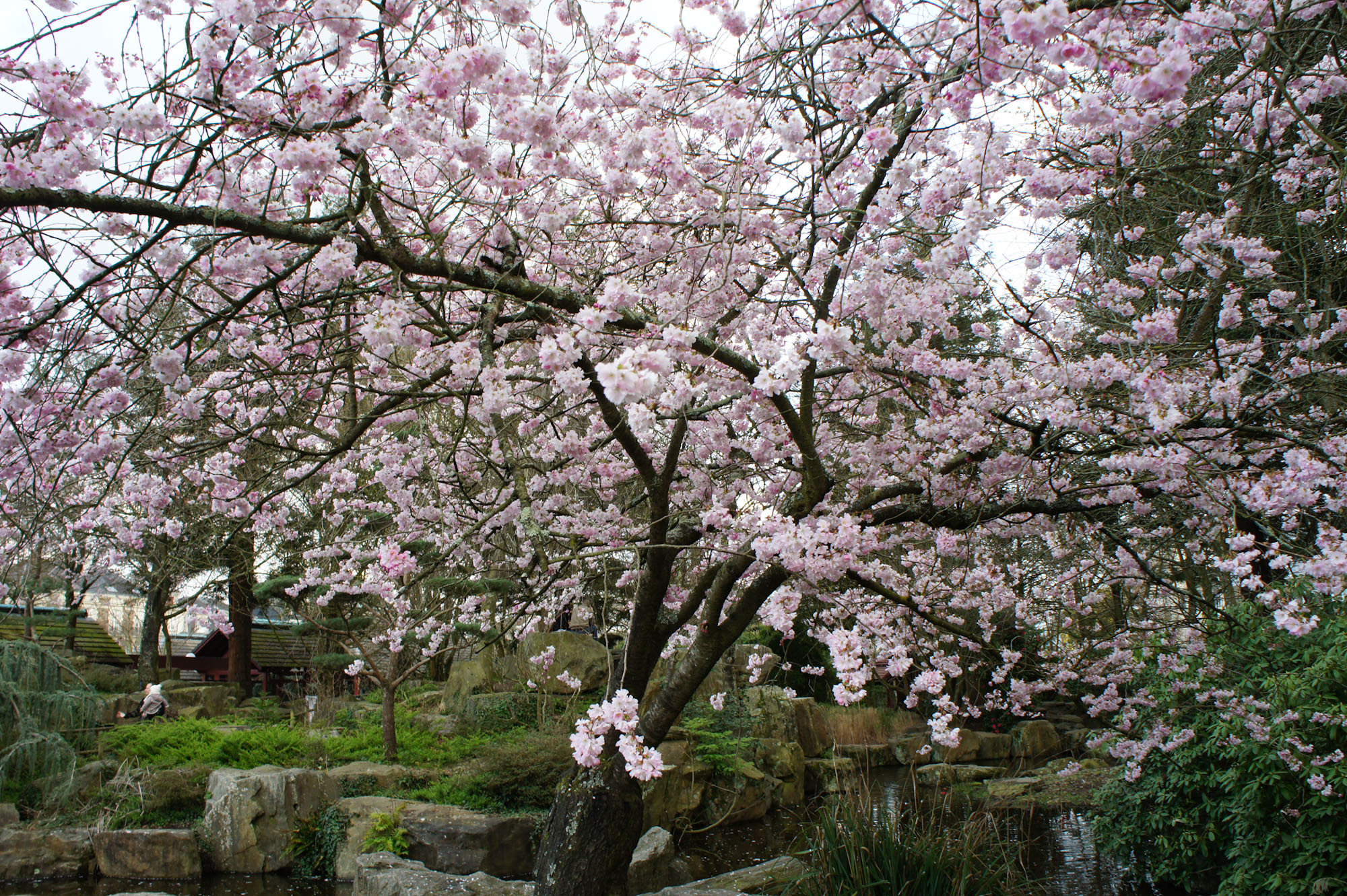 D co faire un petit jardin japonais argenteuil 22 - Faire un jardin japonais ...
