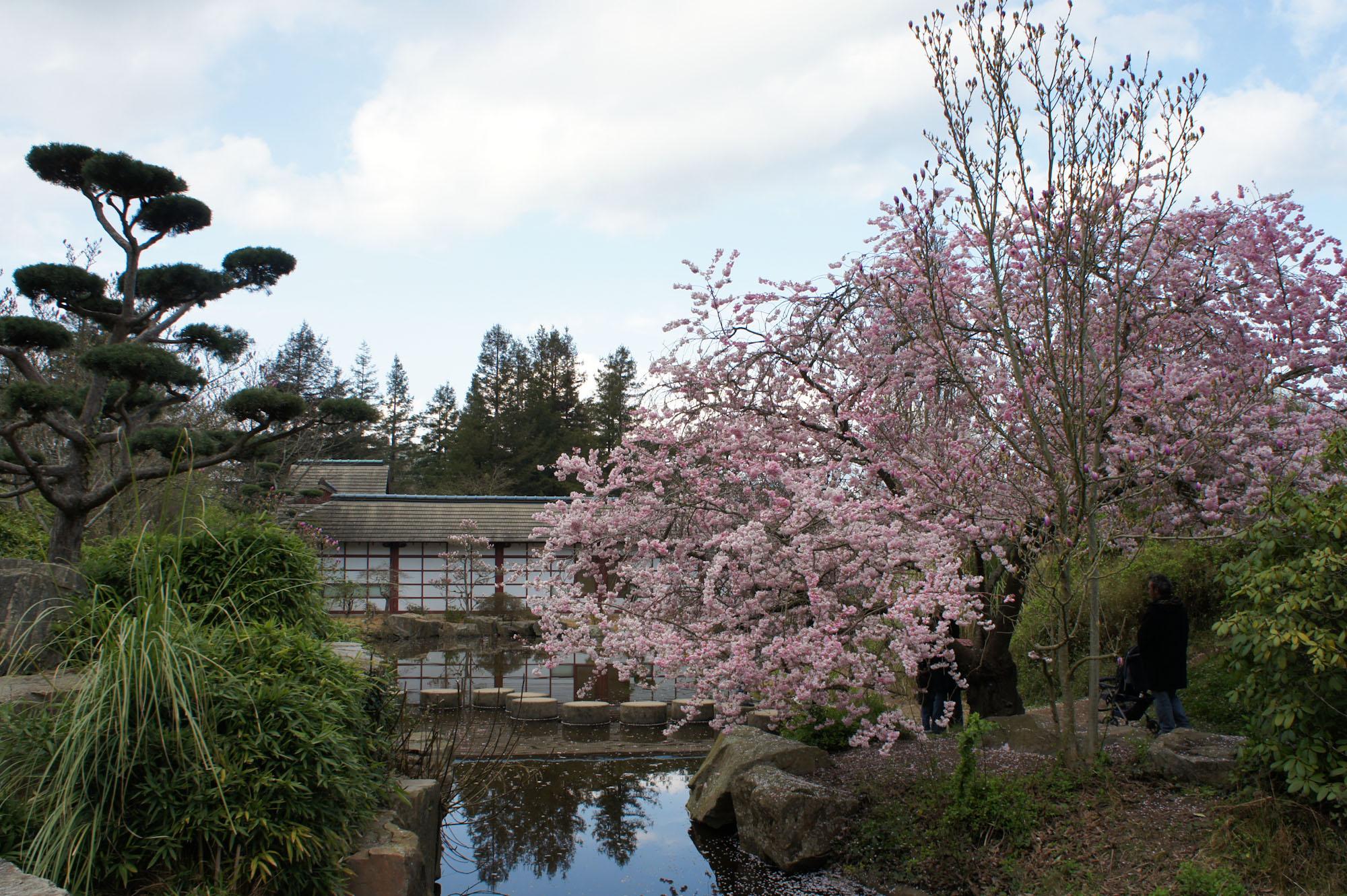 Jardin japonais nantes for Jardin japonais cholet