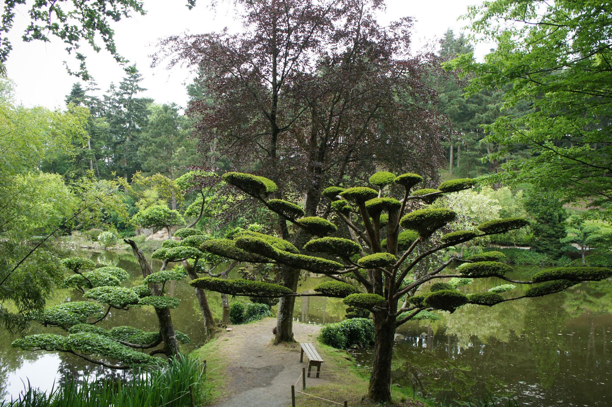 Jardin japonais de maul vrier for Le jardin japonais nantes