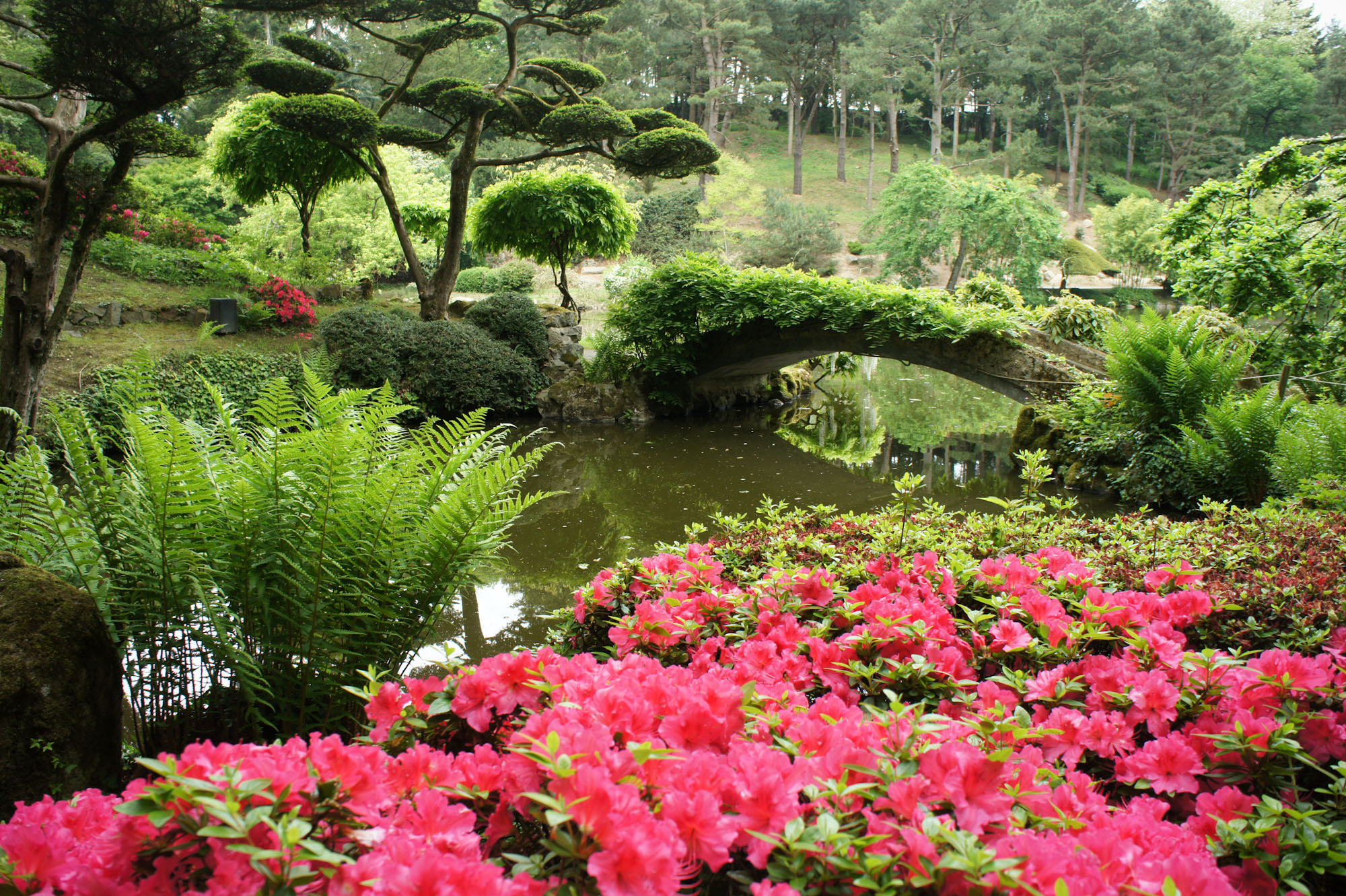 jardin japonais de maul vrier
