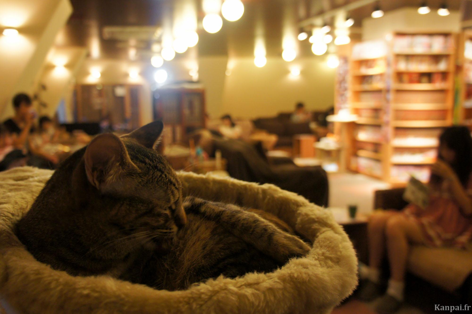 Cafe Des Chats  Ef Bf Bd Paris