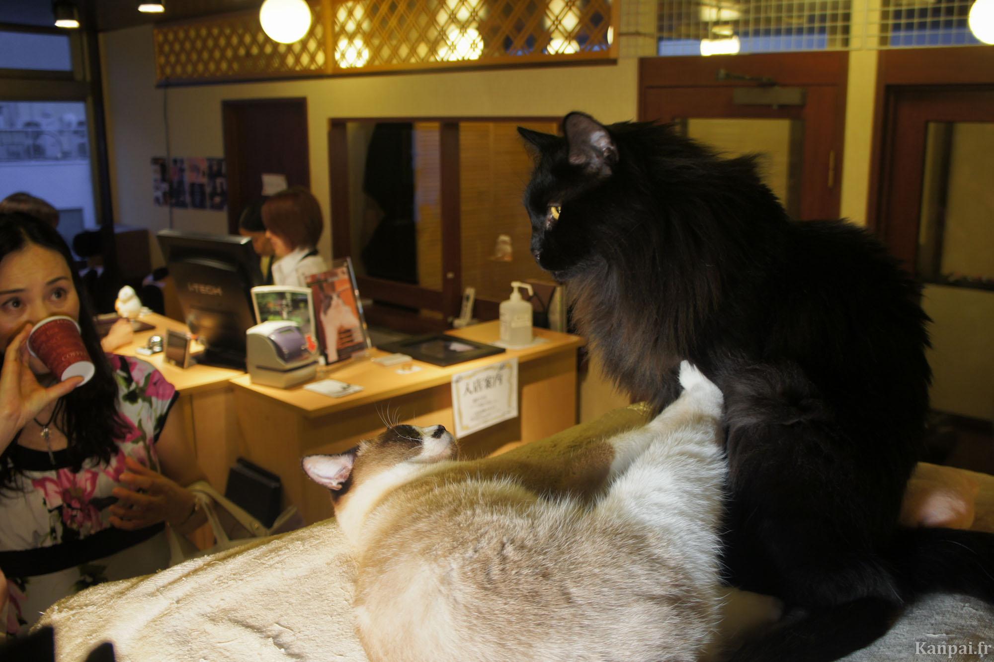 Cafe Des Chats A Paris