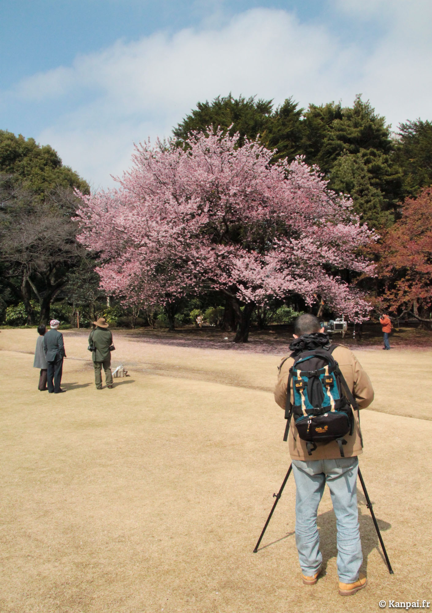 Shinjuku gyoen le jardin imp rial national de tokyo for Le jardin imperial marines de cogolin