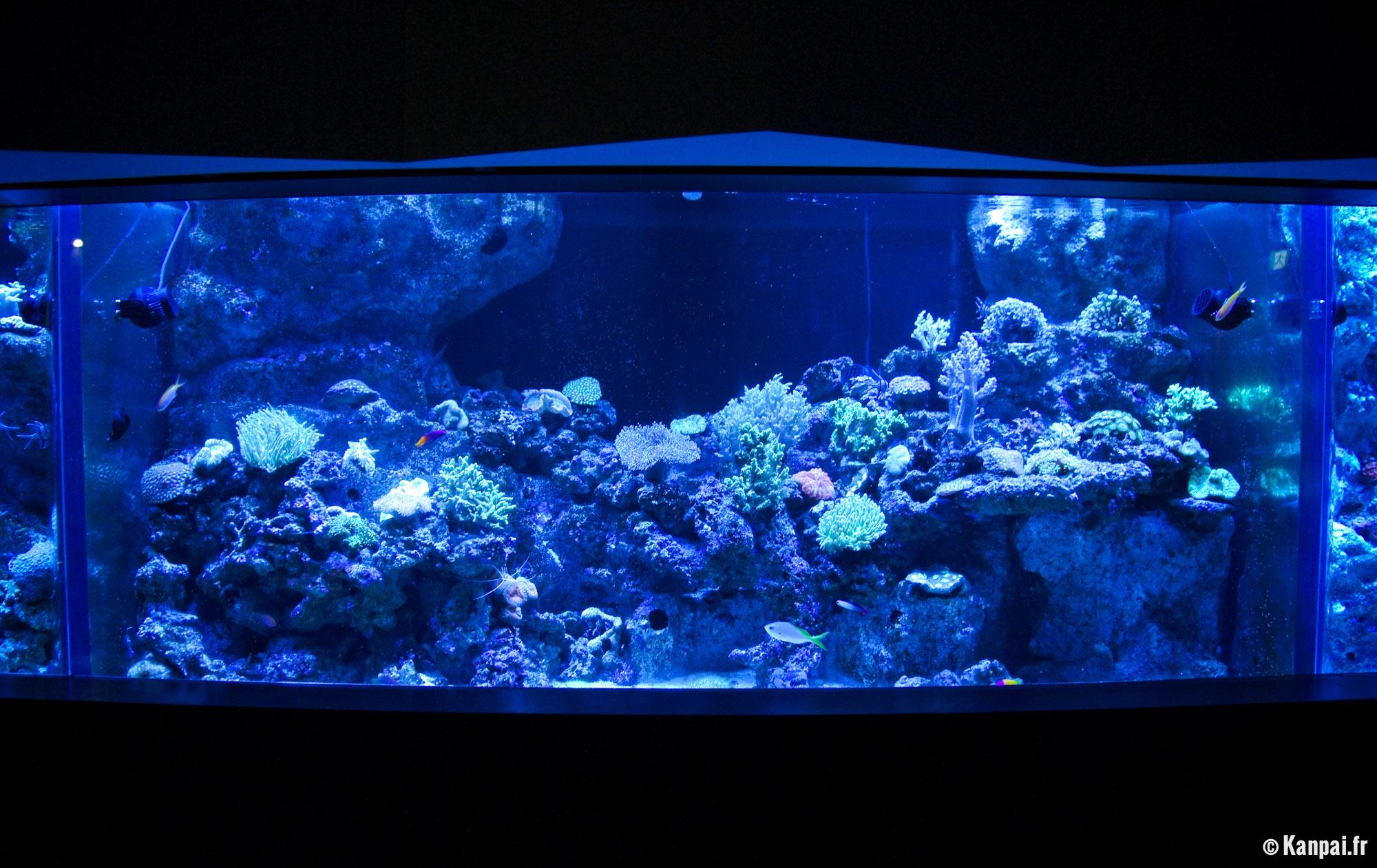 Aqua park l 39 aquarium de shinagawa for Site aquarium