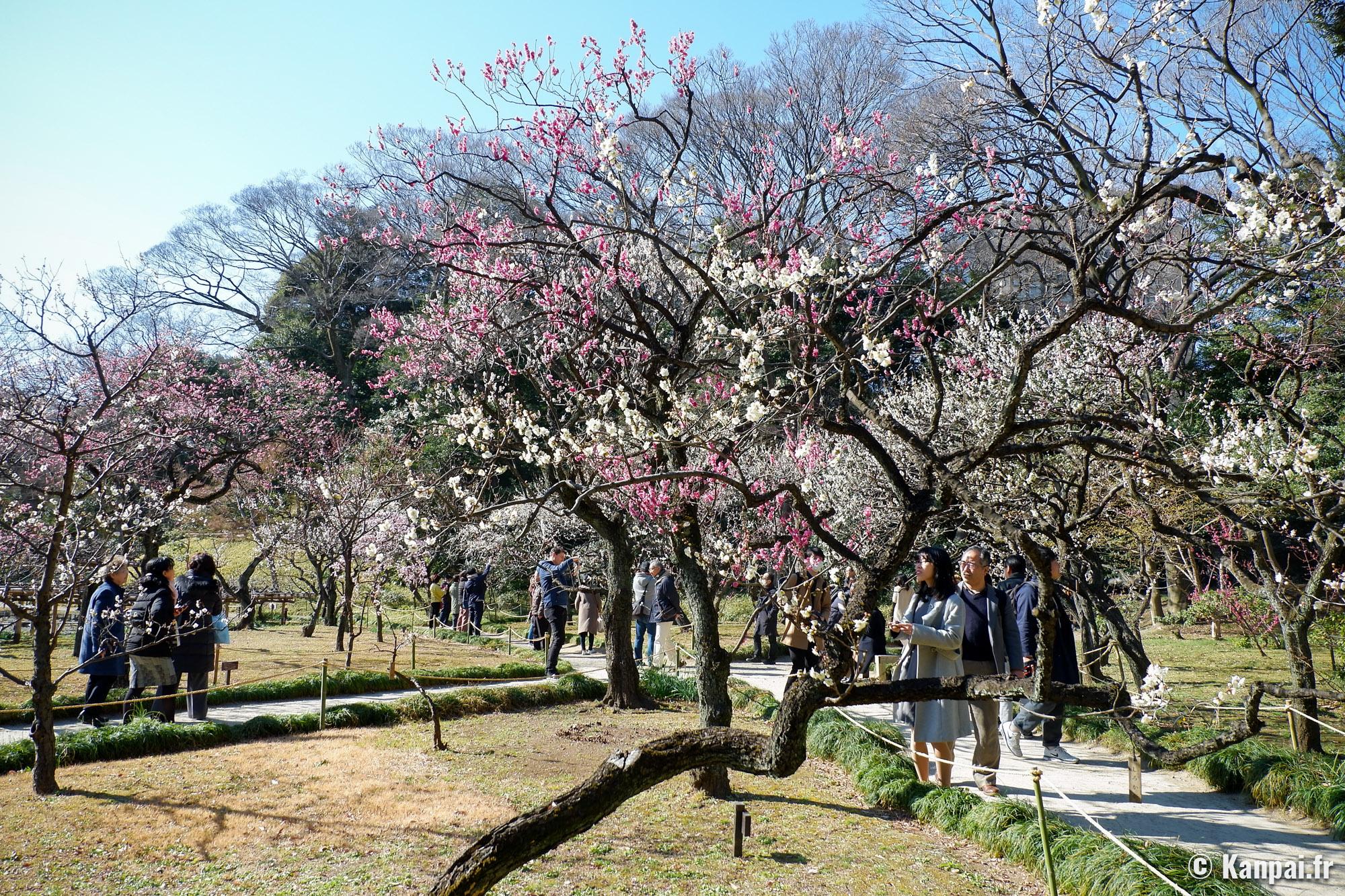 Le Jardin Botanique Koishikawa Tokyo Japan Travel