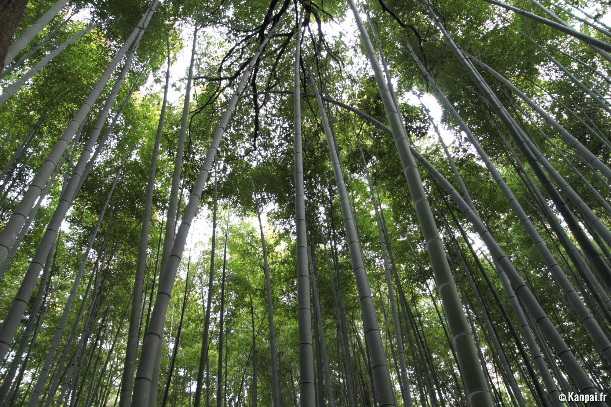 bambouseraie d 39 arashiyama la for t de bambous de sagano. Black Bedroom Furniture Sets. Home Design Ideas